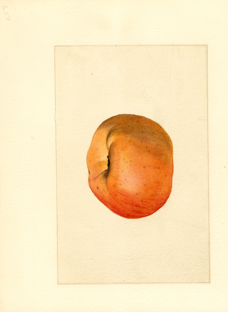 Apples, York (1909)