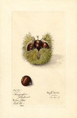 Chestnuts (1917)
