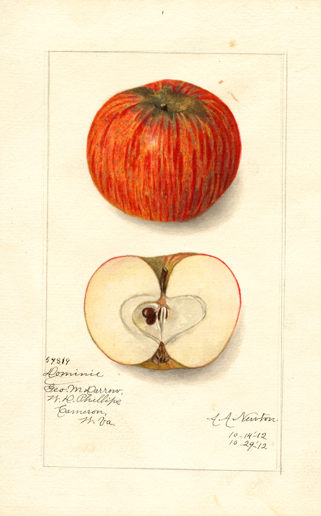 Apples, Domine (1912)