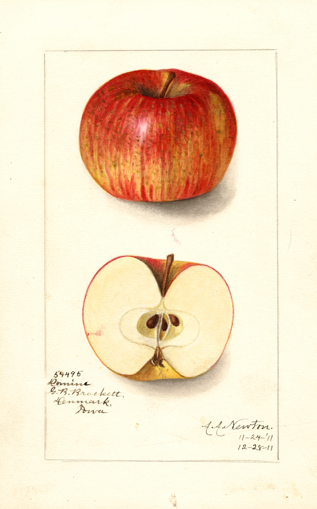 Apples, Domine (1911)