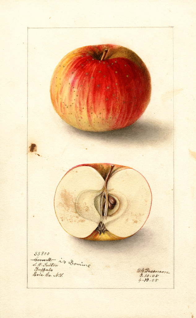 Apples, Domine (1905)