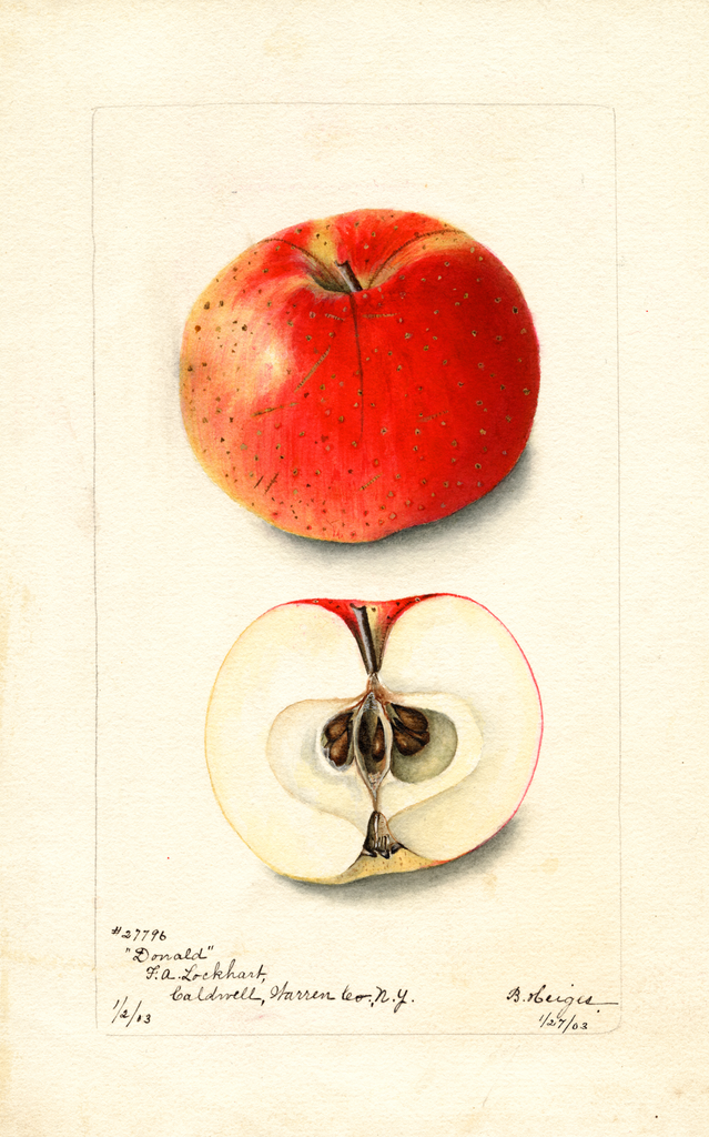 Apples, Donald (1903)