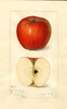 Apples, Doctor Matthews (1917)