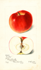 Apples, Dudley (1899)