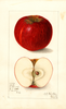 Apples, Dula (1909)