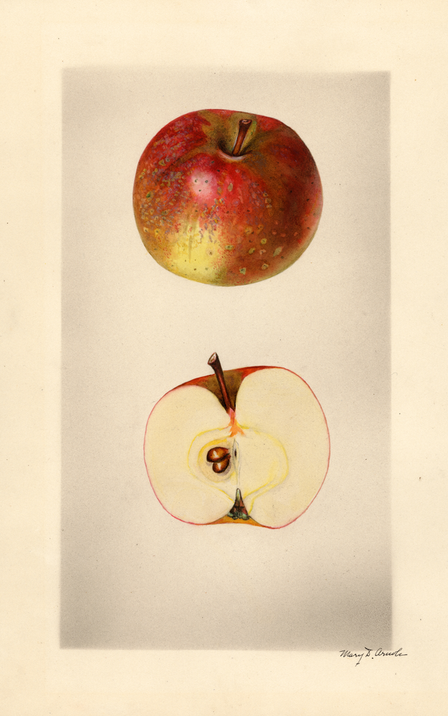 Apples, Dulaney (1927)