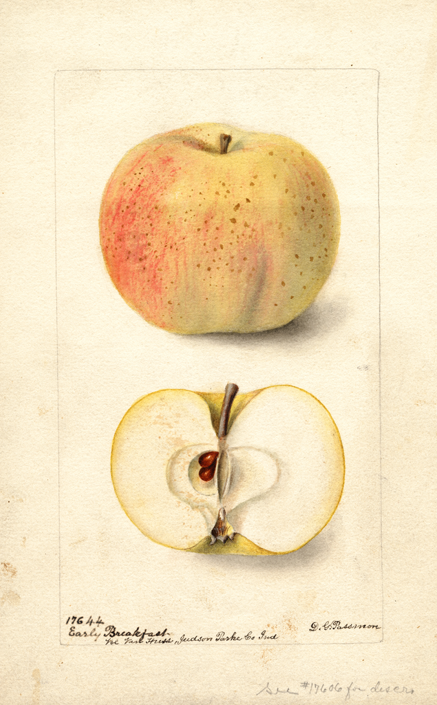 Apples, Early Breakfast (1899)