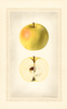 Apples, Cooper Early White (1924)