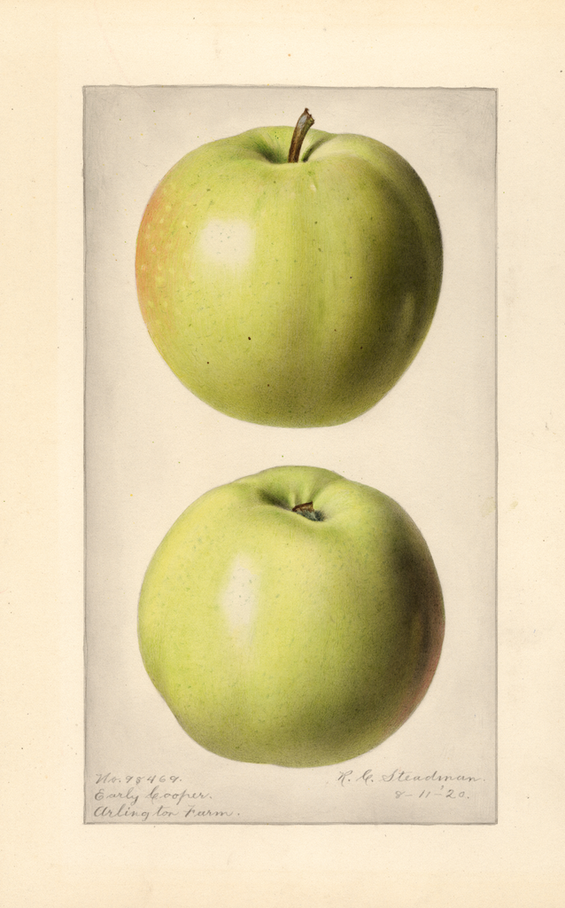 Apples, Early Cooper (1920)