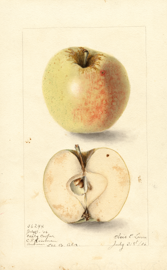 Apples, Early Cooper (1906)