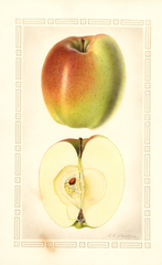 Apples, Indo (1928)