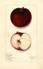Apples, Jersey Black (1913)