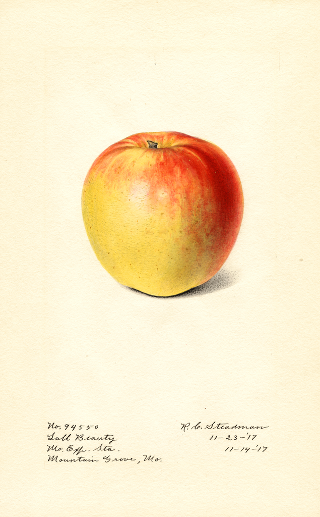 Apples, Lall Beauty (1917)