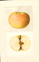 Apples, Landakergska (1939)
