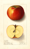 Apples, Magoon (1911)