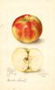 Apples, Goodwin (1905)