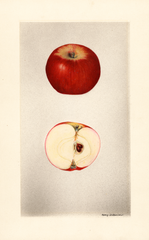 Apples, Rouge Der Laudel