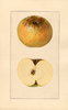 Apples, Yellow Newtown (1925)
