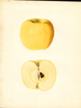 Apples, Yellow Newtown (1936)