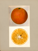 Oranges, Pineapple Orange (1936)