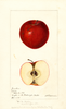 Apples, Jonathan (1895)