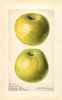 Apples, Northwestern (1919)