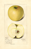 Apples, Northwestern Greening (1917)