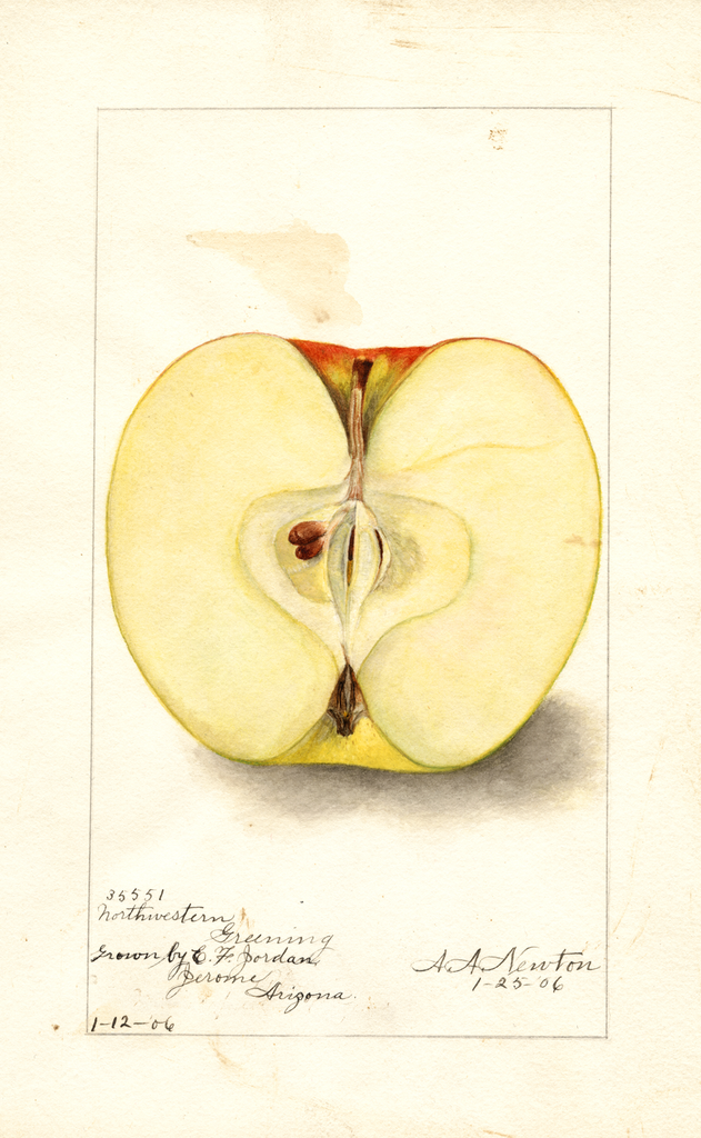 Apples, Northwestern Greening (1906)
