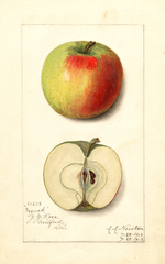 Apples, Nyack (1913)