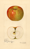 Apples, Oakland (1921)