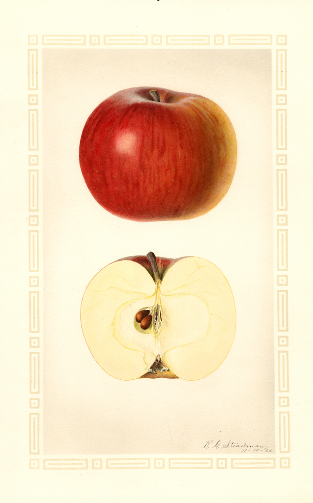 Apples, Ogleby (1926)