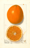 Oranges, Washington Navel (1914)