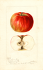 Apples, Iowa Flat (1896)