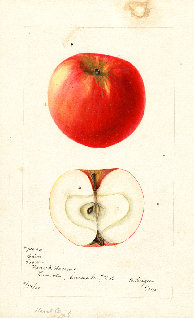 Apples, Cain (1900)