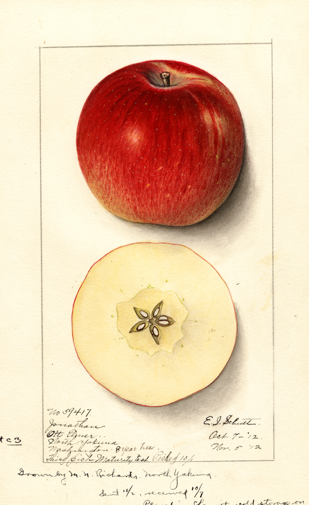 Apples, Jonathan (1912)