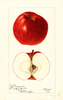 Apples, Ohio Nonpareil (1897)