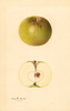Apples, Ohio Pippin (1931)