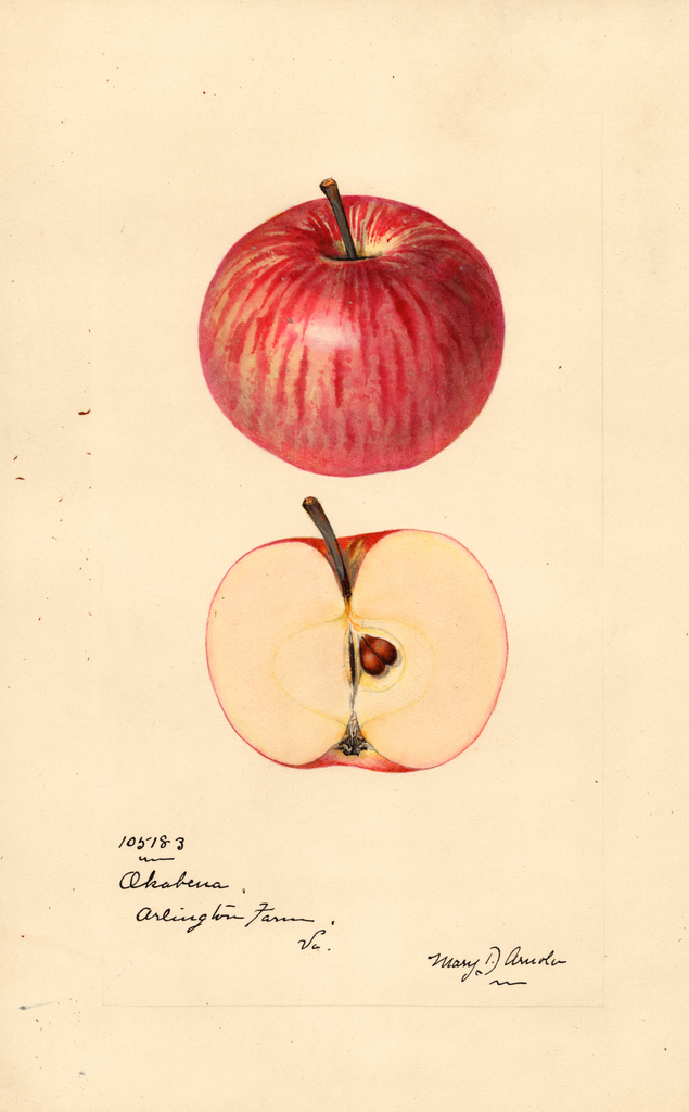 Apples, Okabena (1924)
