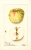 Apples, Hershal Cox (1904)