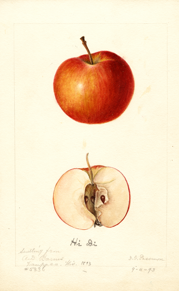 Apples, Hi Di (1893)