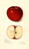 Apples, Highfill (1914)