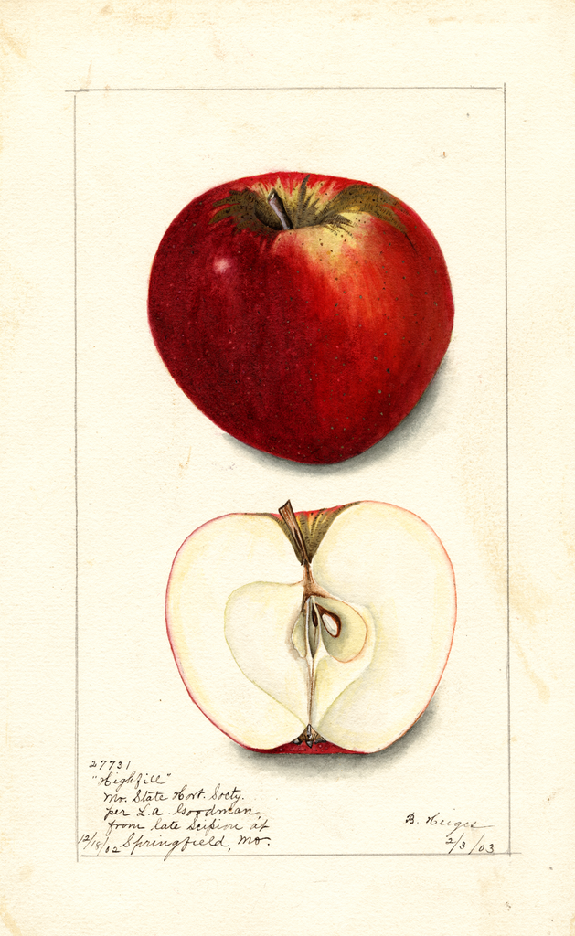 Apples, Highfill (1903)