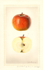 Apples, Hogg (1927)