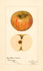 Apples, Hog Island Sweet (1921)