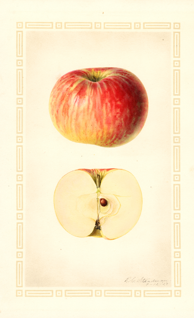 Apples, Hog Island (1927)