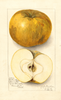 Apples, Hollandberry Admirable (1912)