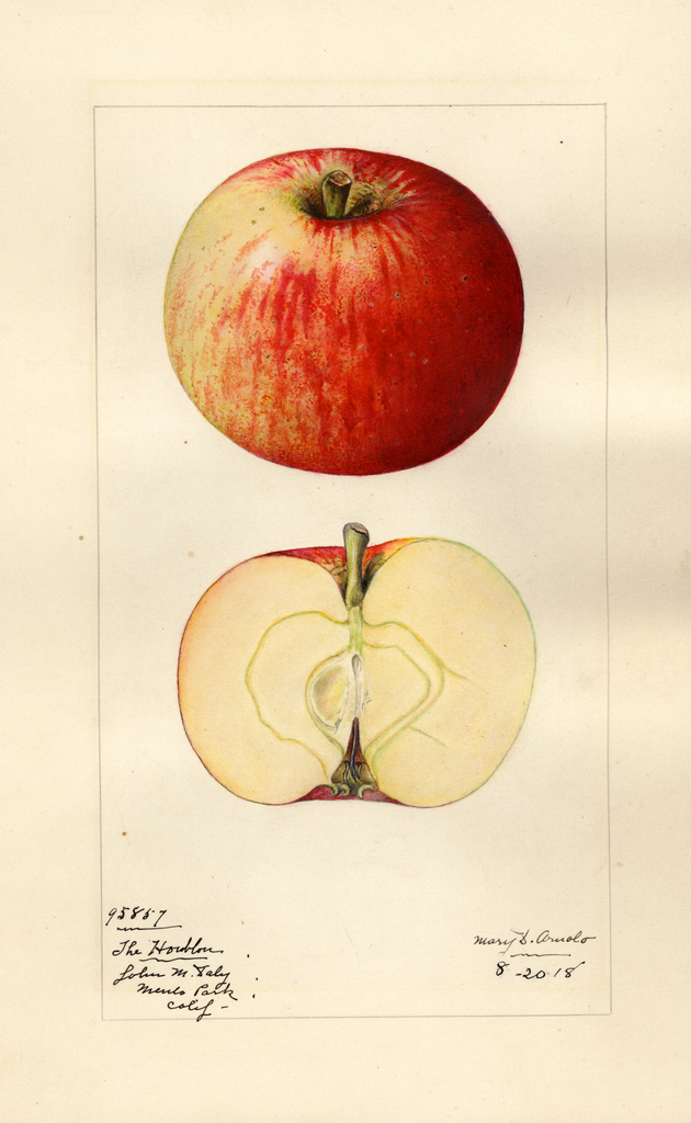 Apples, Houblon (1918)