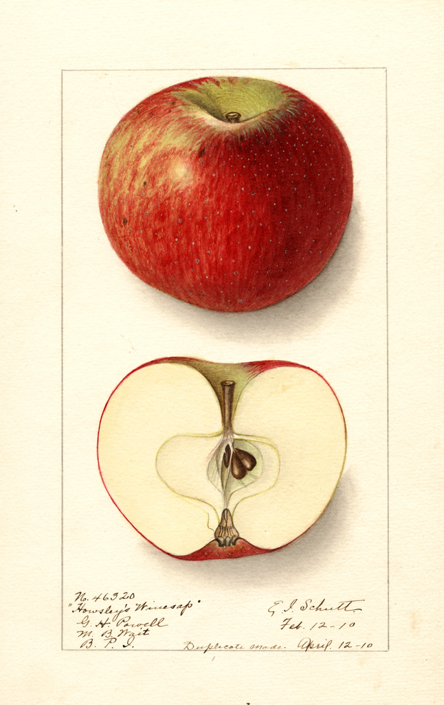 Apples, Howsleys Winesap (1910)
