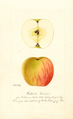 Apples, Hubbards Pearmain (1888)