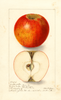 Apples, Hubbardston (1906)